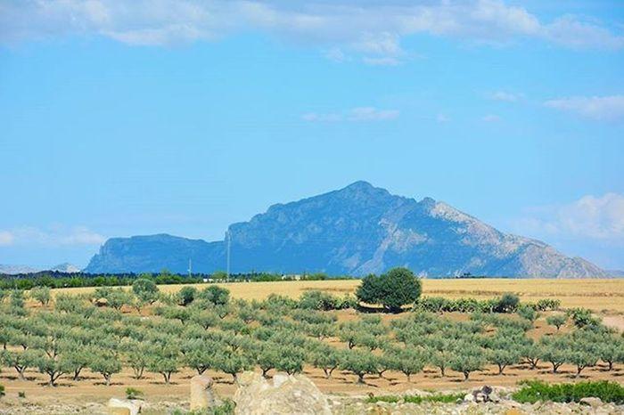 Tunisia IgersTunisia Mountain Tree Olive Wikilovesearth صباح الخير يا تونس البهيه ... و سرمن رأى :)