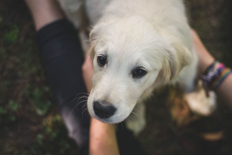 Pets Domestic One Animal Dog Canine Domestic Animals Mammal Vertebrate Human Hand Close-up One Person Hand Real People Focus On Foreground Animal Body Part Lifestyles Human Body Part Pet Owner