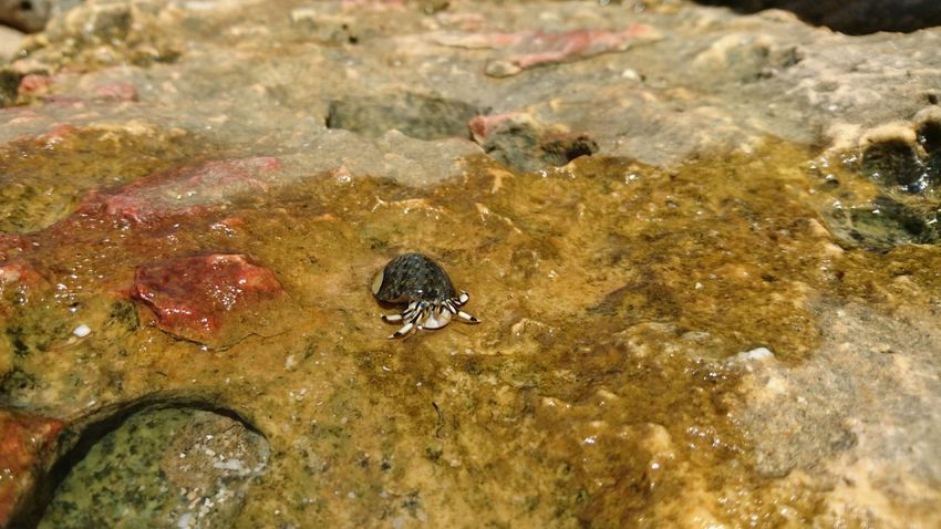 XperiaZ5 Sea Snail Batu Bengkung Beach Malang INDONESIA