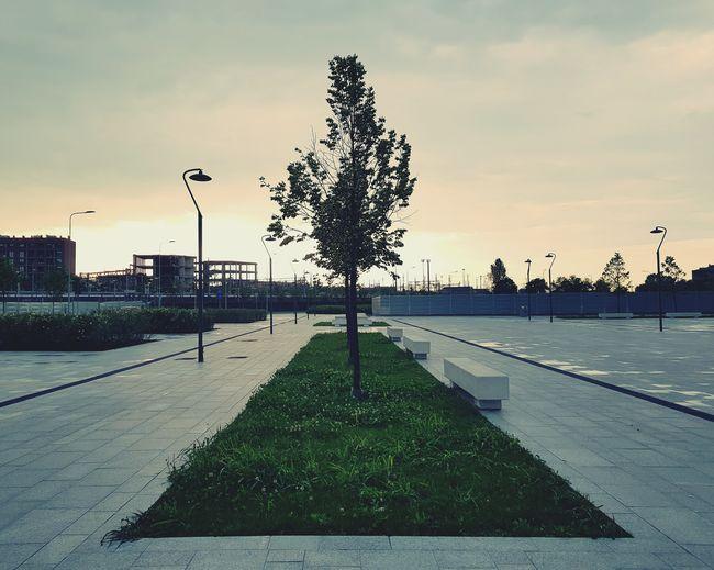 Sunset Park - Man Made Space Tree Tree Sky