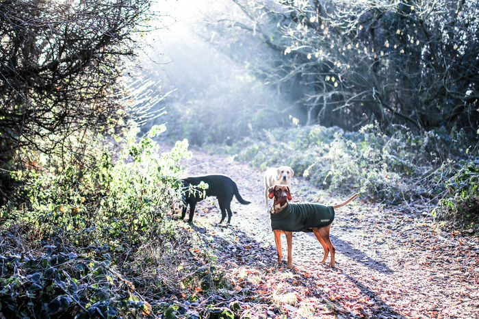 Animal Themes Beauty In Nature Day Domestic Animals Horse Light And Shadow Mammal Morning Morning Light Nature No People Outdoors Pets Sun Sun Beams Tree Working Animal