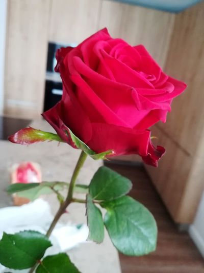 Flower Rose - Flower Red Flower Head Beauty In Nature Vase Freshness Frommyboyfriend ❤️🔥❤️ 😚