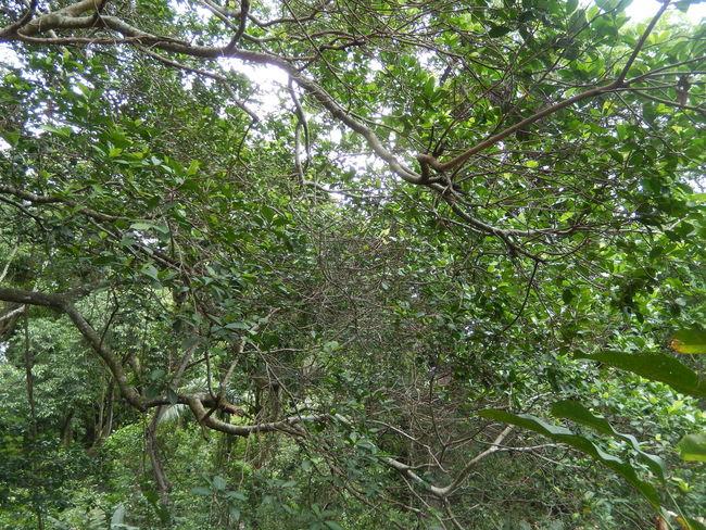 Amazona Amazonas Blosssom Green Plant Tree Tree Trunk Trees Tropical Fruits Amazon Amazon Rainforest Amazonia Beauty In Nature Botany Ecology Ecotourism Environment Flower Landscape Outdoors Plants And Flowers Rainforest Tropical Climate Tropical Flowers Tropical Plants
