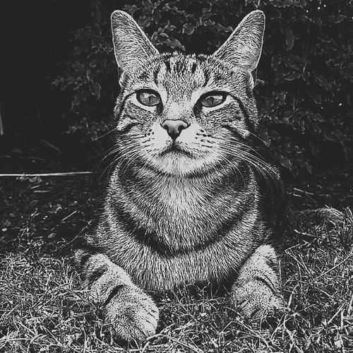 Perfect Match Capture The Moment Blackandwhitephotography Portrait Photography Cat Cats Of EyeEm Cat♡ Heart Of A Tiger