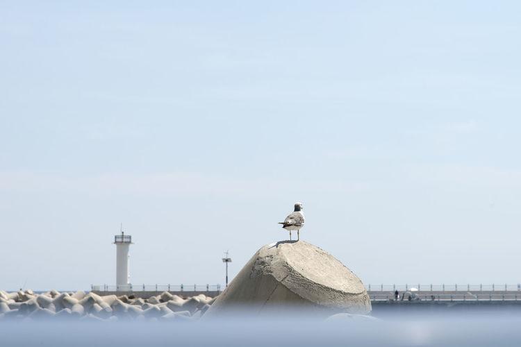 Seagull perching on tetrapod against sky