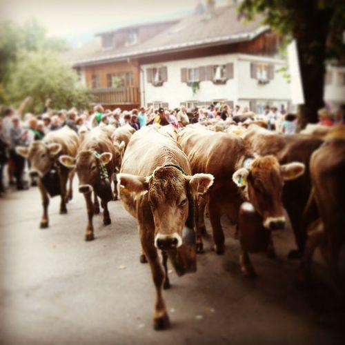 Viehscheid Thalkirchdorf Oberstaufen Allgaeu allgäu alpen