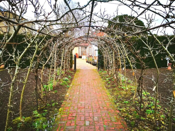 Greenhouse Yew Hedges Garden Feature Formal Garden Early Spring Arboretum Tree Tunnel Trained Fruit Trees Brick Path Tree Building Exterior Outdoors Day Built Structure The Way Forward Architecture