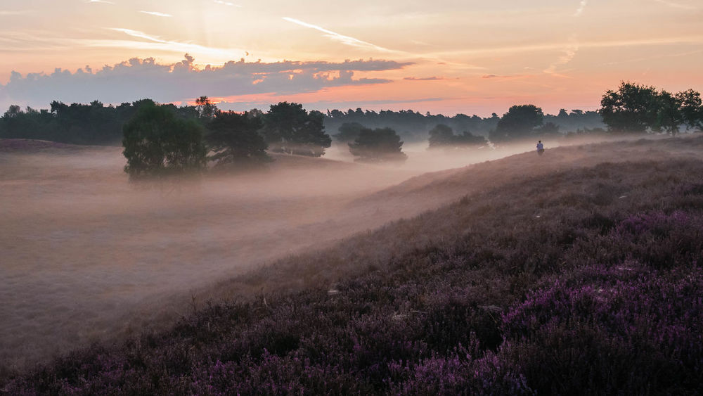 Beauty In Nature Day Dusk Heidelandschaft Landscape Nature No People Outdoors Scenics Silhouette Sky Social Issues Sonnenaufgang Sunset Tranquility Tree Westruper Heide