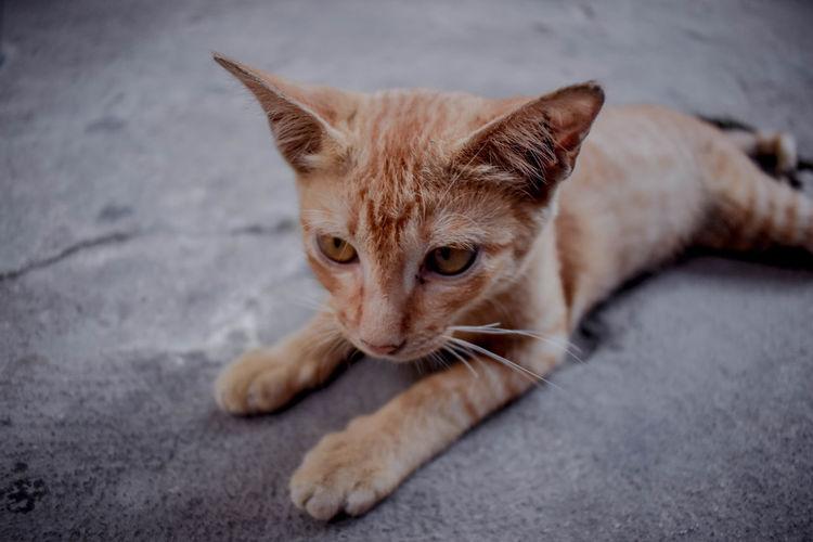 Cat Pets Feline