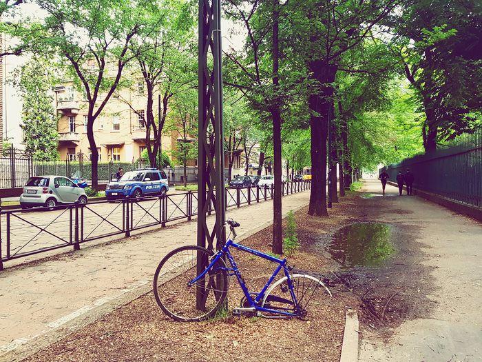 Broken Beauty Leftbehind Broken Bike Lone Tree Bicycle Rack Bicycle Architecture The Way Forward EyeEmNewHere