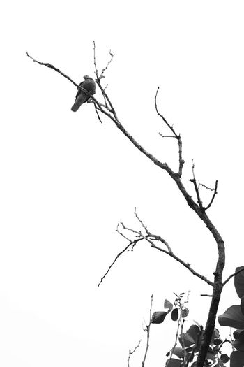 Black And White Black And White Photography Black And White Bird Bird Bird Photography Bird On The Tree Bird And Tree One Animal Animal