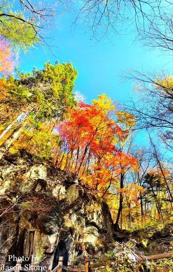 望天鹅 Autumn Nature Tree Change Beauty In Nature Tranquility Tranquil Scene No People Low Angle View Day Scenics Growth Leaf Outdoors Multi Colored Branch Sky