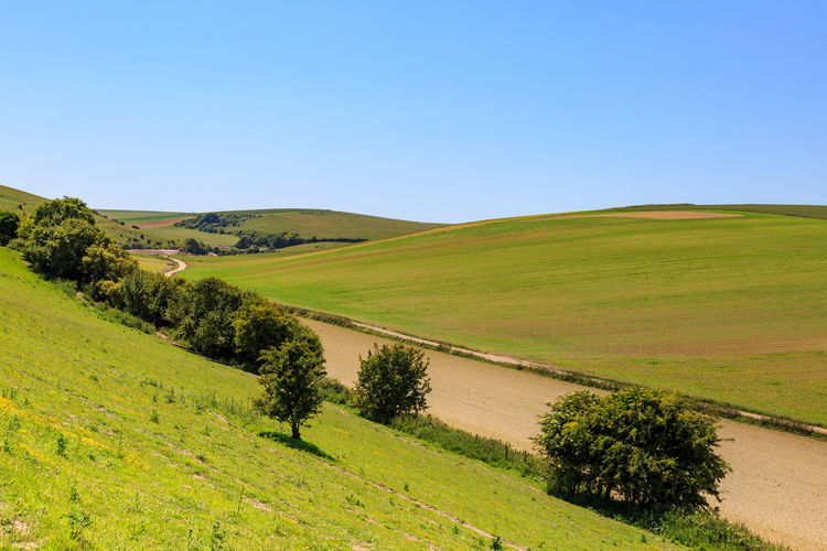 South Downs Landscape Agriculture Beauty In Nature Blue Sky Clear Sky Countryside Crops Day Farmland Field Grass Green Color Hill Hills Landscape National Park Nature No People Outdoors Rural Scene Scenics Sky South Downs South Downs Way Sussex Tree