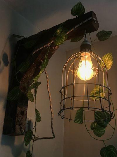 The light Lighting Equipment Illuminated No People Hanging Plant Light Low Angle View Indoors  Nature Electricity  Decoration Glowing Wall - Building Feature Light Bulb Electric Light Shadow Tree Light - Natural Phenomenon Architecture Electric Lamp
