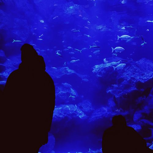 Aquarium Fish Blue Watching Silhouette Large Group Of Animals Swimming Rear View Water VSCO Eyem Best Shots Mobilephotography