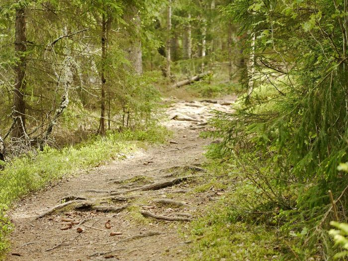 There's nothing like a walk in the forest. Forest Nature Hunneberg Sweden