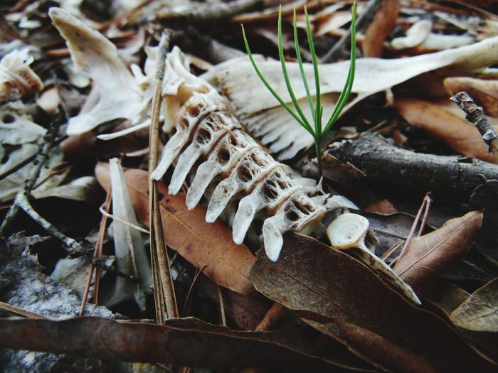 Nature Life And Death In Nature Living And Dead Spine Skelton Bones Sapling Tree Perspectives On Nature