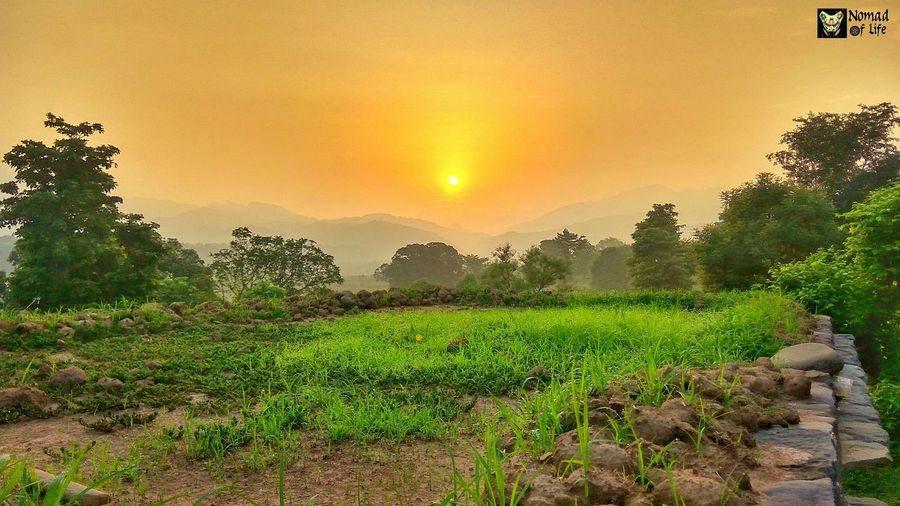 The golden green landscape... Agriculture Tree Growth Field Nature Beauty In Nature Sunset Sun Green Color Outdoors No People Rural Scene Landscape Scenics Sky Tea Crop Day Freshness Sunrise_Collection Travel Photography Skyscraper Sunrise Tree Area Epic Cloud - Sky