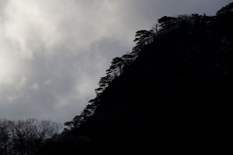 Plant Tree Sky Cloud - Sky Nature Beauty In Nature No People Tranquility Scenics - Nature Low Angle View Silhouette Tranquil Scene Dark Dusk Outdoors Growth Non-urban Scene Land Day Japan Japan Photography Silhouette