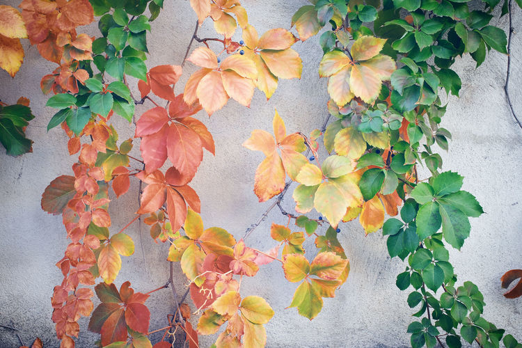 Colors Green Color Orange Wall Autumn Beauty In Nature Blooming Close-up Day Growth Leaf Leaves Nature No People Outdoors Plant