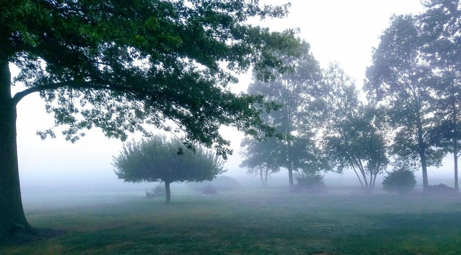 Tree Fog Nature