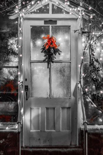 Plant Christmas Decoration Tree Celebration Christmas Decoration Flower Building Exterior Illuminated Holiday