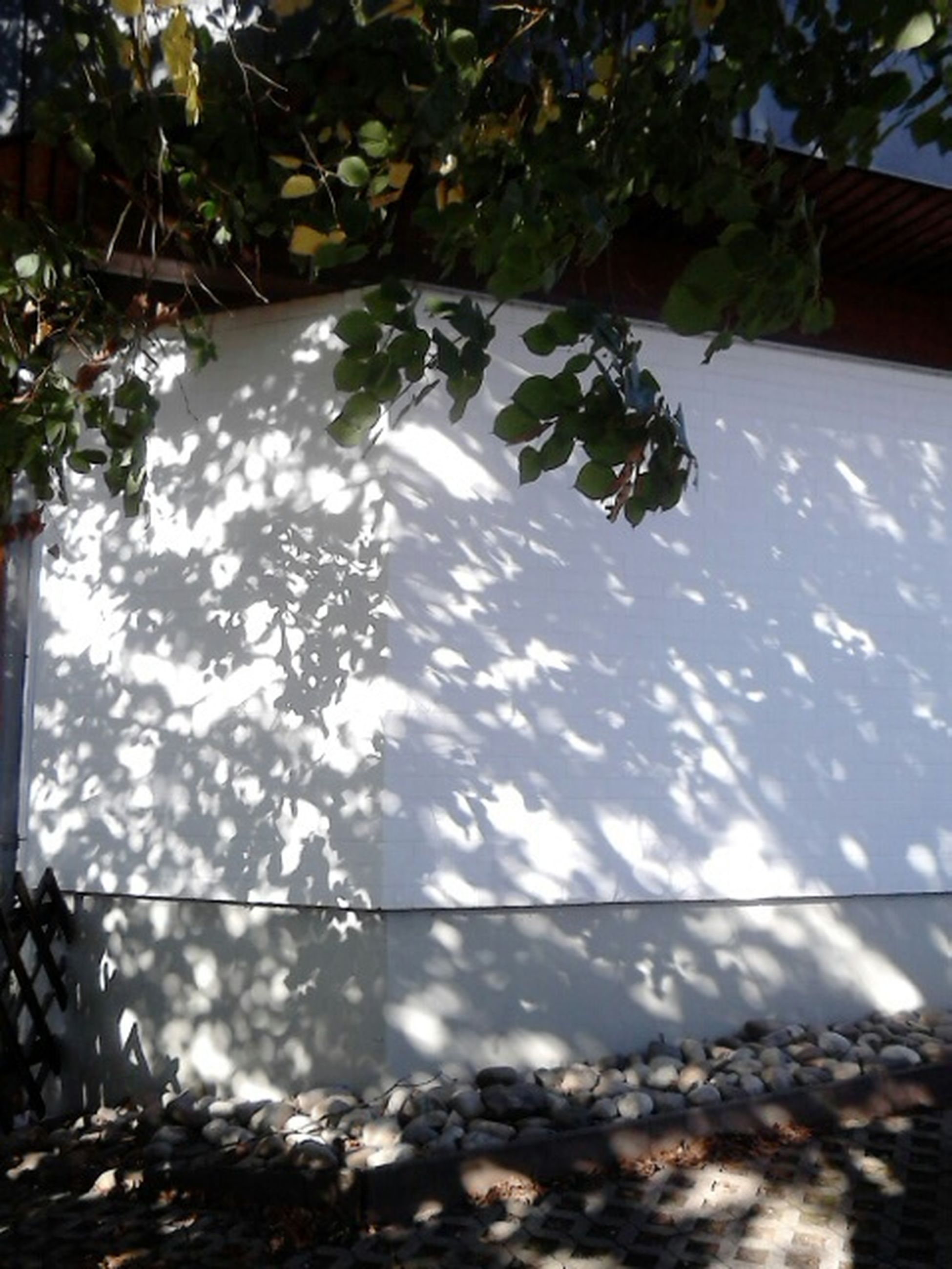 tree, sunlight, built structure, building exterior, leaf, nature, architecture, growth, day, season, plant, no people, house, water, outdoors, tranquility, window, sky, reflection, glass - material
