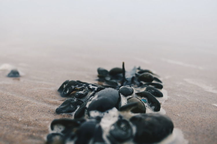Close-up of shells on sand at beach