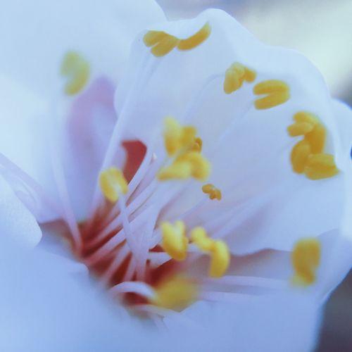 Hello World Enjoying Life Nature Flowers Colors Beautiful White Macro mac