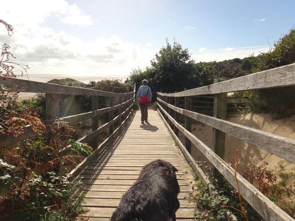 Enjoying The Sun Dogslife Beach Life Welsh Coast