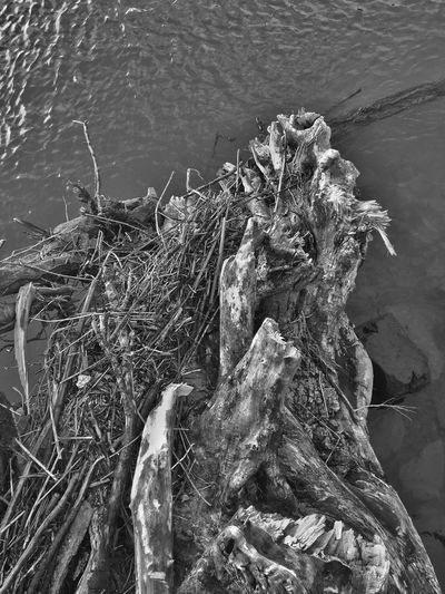 Abstract Nature Outdoors Water Close-up Nature Wood - Material Over Water Patterns In Nature Layers And Textures Perspective Driftwood Abstractions Black & White Natural Collages Natural Condition Weathered Shapes And Forms Abstract View Black And White Shapes In Nature  Textured