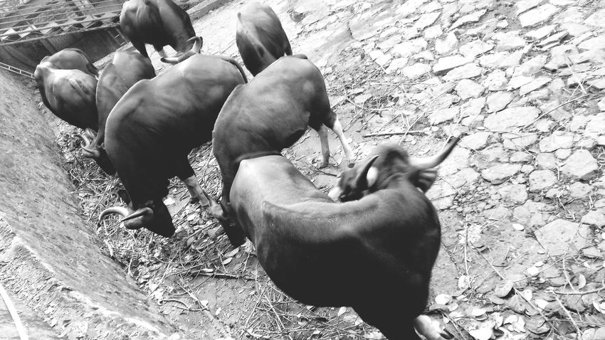 EyeEm Selects Animal Themes Mammal Domestic Animals Day Outdoors Togetherness Animals In The Wild