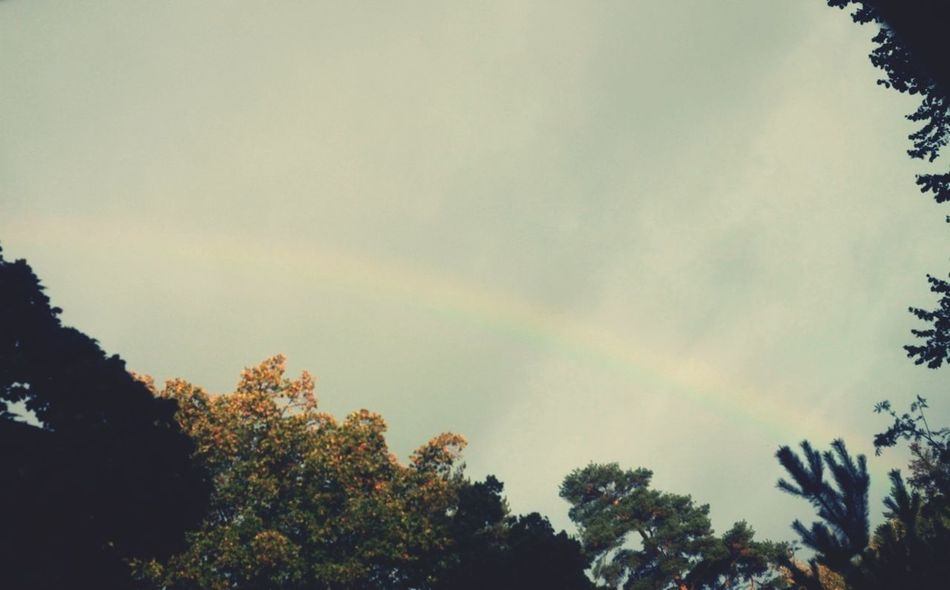 Another rainbow, two days in a row. I'm never tired of this magic. Rainbow