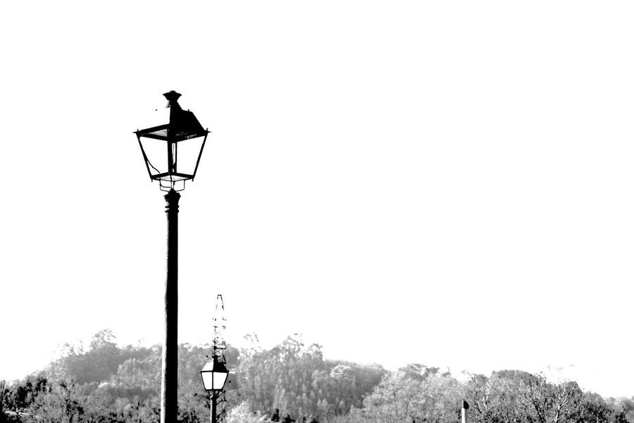 Street Light Outdoors Lighting Equipment Bird Animals In The Wild Clear Sky Perching No People Day Animal Themes Nature Sky