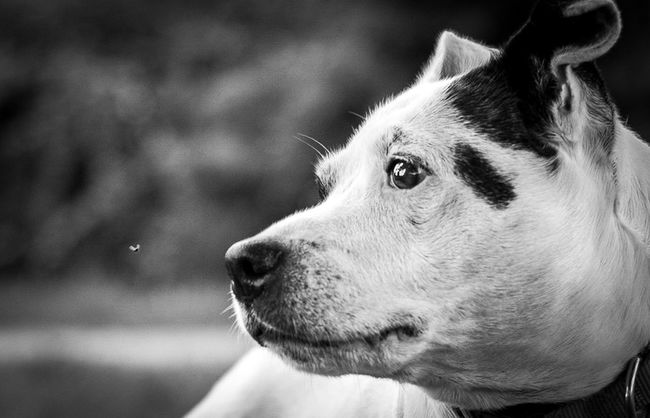 Eyes on fly Dog Pets One Animal Domestic Animals Mammal Animal Themes Focus On Foreground Close-up Outdoors Day Dogs Of EyeEm Pet Photography  Dogs Nature The Week On EyeEm Pet Portraits Black And White Friday