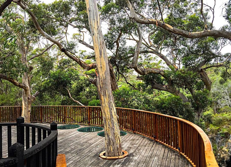 Viewing Platform in the Trees Western Australia Viewing Platform Deck Observation Deck Observation Point Nature Trees Lake Cave Viewing Platform Elevated View Tree Tops Trees View Unique Trees Green Leaves Branches Tree Porn Karri Trees