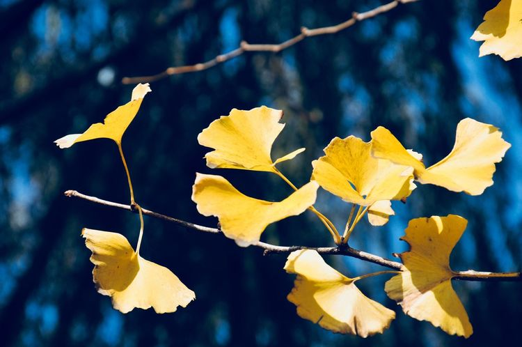 Leaf Focus On Foreground Outdoors Day Nature Autumn Yellow