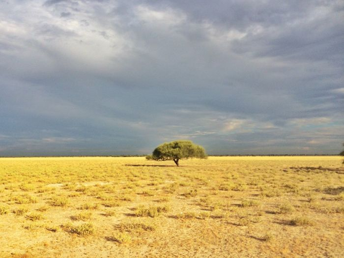 Tree Kalahari