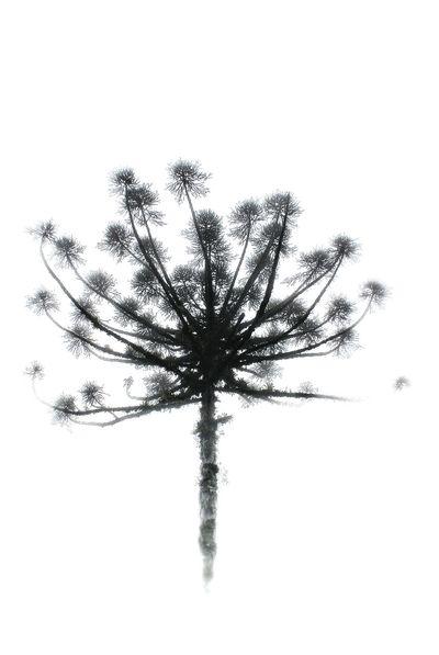 Treegasmic Tuesday Treetastic Landscapes Of Brasil Streamzoofamily