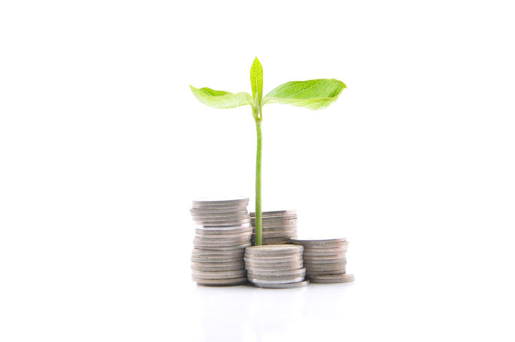 profitable saving concept, plant sprout from coins Bank Coins Dollar Equity Finance Hand Holding Investment Loan  Money Mortgage Penny Pension Plant Profit Return Roi Sale Saving Secure Sprouts White Background