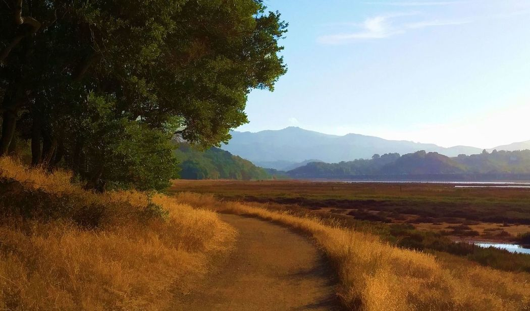 Rush Creek Trail Beauty In Nature Day Field Grass Growth Landscape Mountain Nature No People Outdoors Scenics Sky Tranquil Scene Tree