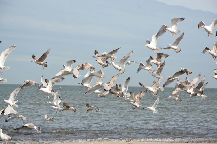 Side View Of Birds Flying Over Calm Sea