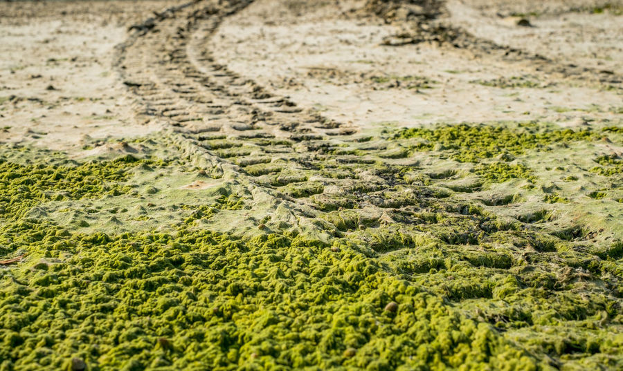 Off road car tyre track on sandy beach with algae Algae Algae On The Beach Algae Water Backgrounds Car Tyre Car Tyres Close-up Day Full Frame Green Algae Nature No People Off Road Outdoors Sand Tracks Sand Trails Sandy Beach Track Water