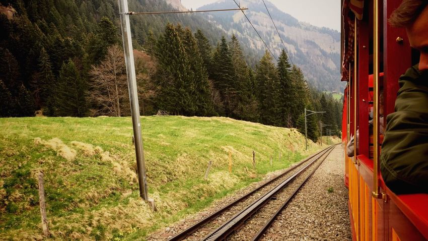 Transportation Day Tree Nature Outdoors Iphone6 Schweiz