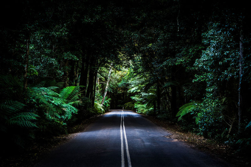 Mount Wilson Tree Direction Plant Road The Way Forward Transportation Forest Growth Nature Land No People Beauty In Nature Tranquility Diminishing Perspective Green Color Day Road Marking vanishing point Sign Marking Outdoors Mount Wilson Australia