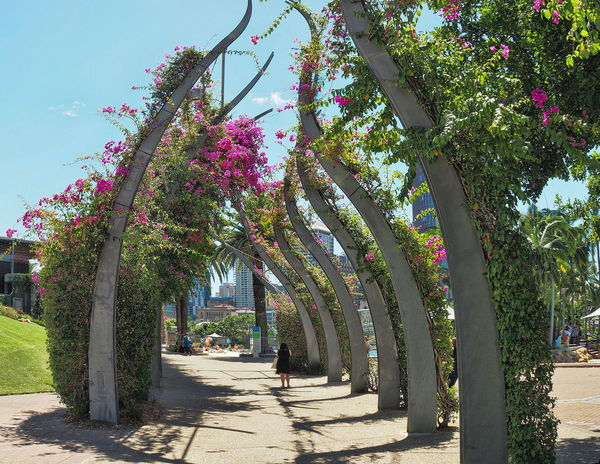 Australia Beauty In Nature Brisbane Brisbane Australia Day Fisheye Flowers Growth Nature No People Outdoors Paths Shadow Sunlight Tree