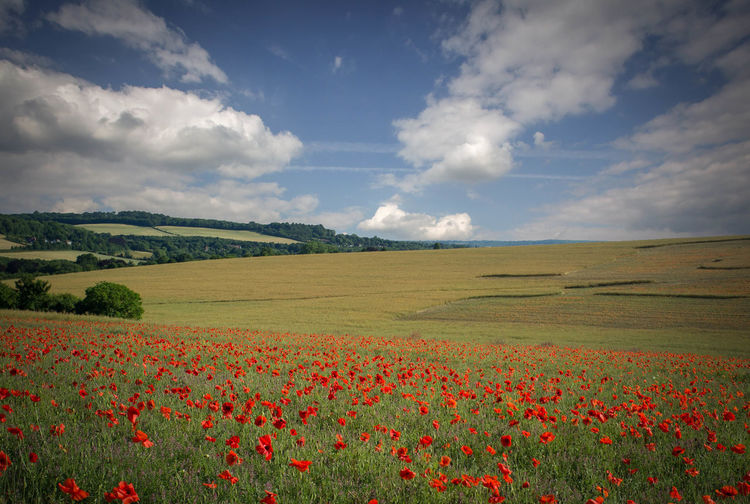 Summer Landscape... Agriculture Beauty In Nature Cloud Farm Field Field Fields Grass Growth Landscape Landscape_Collection Landscapes Majestic Nature Outdoors Poppies  Poppy Rural Scene Scenics Sky Tranquil Scene Tranquility