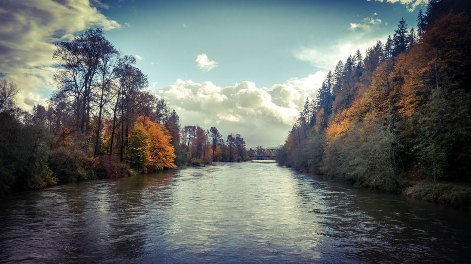 Autumn on the Snoqualmie River in Washington. Autumn Autumn Leaves River Snoqualmie River sky Reflection Cloud - Sky Tree Landscape Nature Water Sunset Scenics Outdoors No People Day