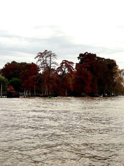 Otoño en Tigre River Riverside River View Sun Rainny Day Autumn Autumn colors Argentina Tigre Río Tigre Agriculture