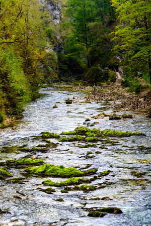 Water Plant Flowing Water No People Day Motion River Tree Beauty In Nature Nature Forest Land Scenics - Nature Tranquility Green Color Growth Outdoors Flowing Stream - Flowing Water